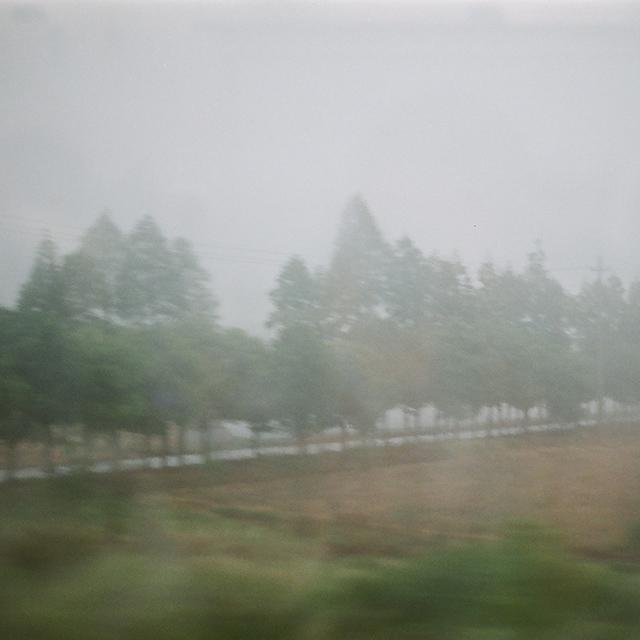 28_tree-8.jpg